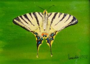 Schwalbenschwanz, Schmetterling, Oelmalerei, Malpappe, 14 x 18 cm